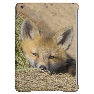 USA, Colorado, Breckenridge. Alert red fox iPad Air Cover