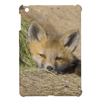 USA, Colorado, Breckenridge. Alert red fox iPad Mini Case