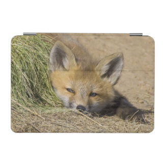 USA, Colorado, Breckenridge. Alert red fox iPad Mini Cover