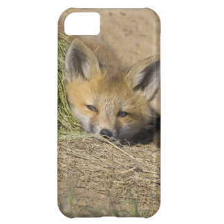USA, Colorado, Breckenridge. Alert red fox iPhone 5C Case