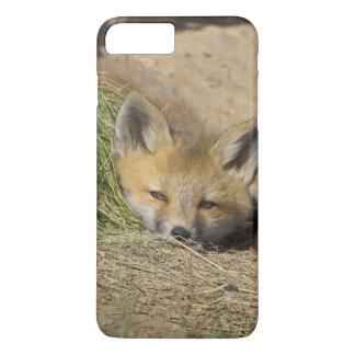 USA, Colorado, Breckenridge. Alert red fox iPhone 8 Plus/7 Plus Case