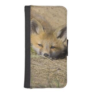 USA, Colorado, Breckenridge. Alert red fox iPhone SE/5/5s Wallet Case