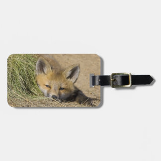 USA, Colorado, Breckenridge. Alert red fox Luggage Tag
