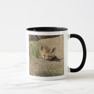 USA, Colorado, Breckenridge. Alert red fox Mug