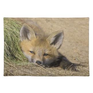 USA, Colorado, Breckenridge. Alert red fox Placemat