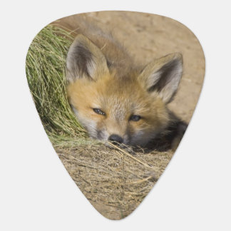 USA, Colorado, Breckenridge. Alert red fox Plectrum