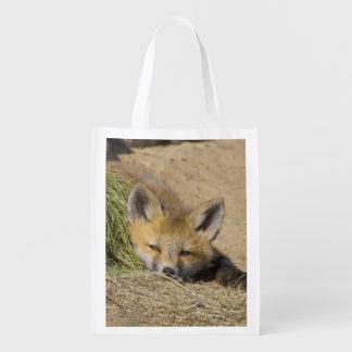 USA, Colorado, Breckenridge. Alert red fox Reusable Grocery Bag