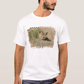 USA, Colorado, Breckenridge. Alert red fox T-Shirt