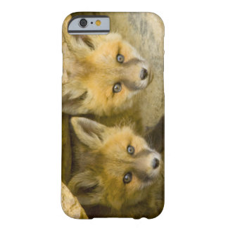 USA, Colorado, Breckenridge. Curious red fox Barely There iPhone 6 Case