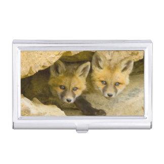 USA, Colorado, Breckenridge. Curious red fox Case For Business Cards