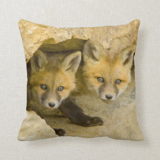 USA, Colorado, Breckenridge. Curious red fox Cushion