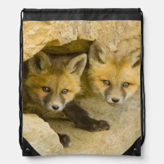 USA, Colorado, Breckenridge. Curious red fox Drawstring Bag