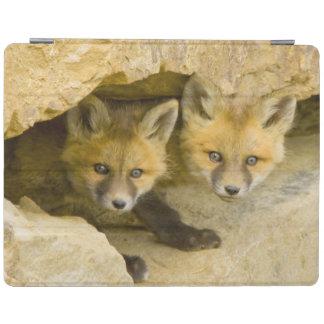 USA, Colorado, Breckenridge. Curious red fox iPad Cover