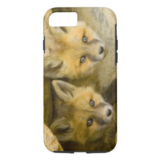 USA, Colorado, Breckenridge. Curious red fox iPhone 8/7 Case