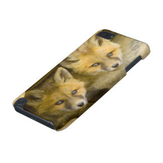 USA, Colorado, Breckenridge. Curious red fox iPod Touch 5G Covers