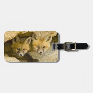 USA, Colorado, Breckenridge. Curious red fox Luggage Tag