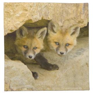 USA, Colorado, Breckenridge. Curious red fox Napkin