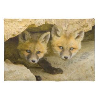 USA, Colorado, Breckenridge. Curious red fox Placemat