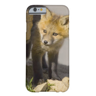 USA, Colorado, Breckenridge. Curious young red Barely There iPhone 6 Case