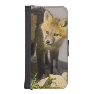 USA, Colorado, Breckenridge. Curious young red iPhone SE/5/5s Wallet Case