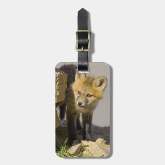 USA, Colorado, Breckenridge. Curious young red Luggage Tag