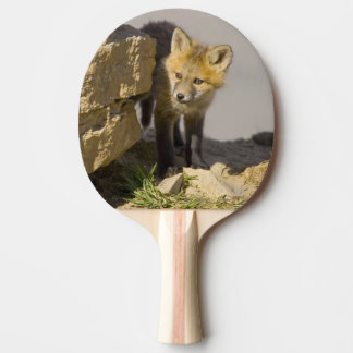 USA, Colorado, Breckenridge. Curious young red Ping Pong Paddle