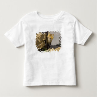 USA, Colorado, Breckenridge. Curious young red Toddler T-Shirt