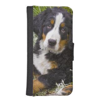 USA, Colorado, Breckenridge. Female Bernese iPhone SE/5/5s Wallet Case