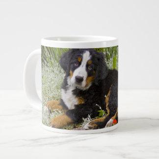 USA, Colorado, Breckenridge. Female Bernese Large Coffee Mug