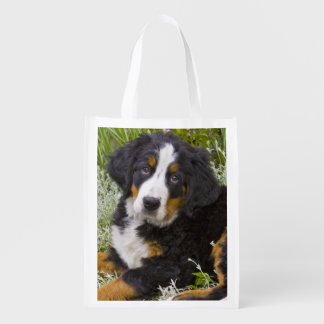 USA, Colorado, Breckenridge. Female Bernese Reusable Grocery Bag