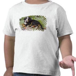 USA, Colorado, Breckenridge. Female Bernese T Shirt