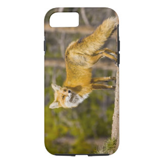 USA, Colorado, Breckenridge. Portrait of red fox iPhone 8/7 Case