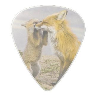 USA, Colorado, Breckenridge. Red fox mother 2 Acetal Guitar Pick