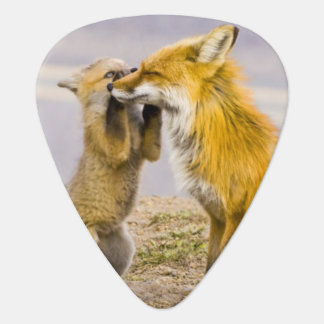 USA, Colorado, Breckenridge. Red fox mother 2 Guitar Pick