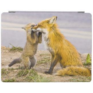 USA, Colorado, Breckenridge. Red fox mother 2 iPad Cover
