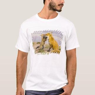 USA, Colorado, Breckenridge. Red fox mother 2 T-Shirt