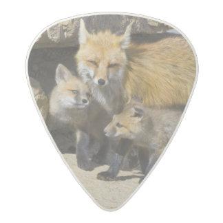 USA, Colorado, Breckenridge. Red fox mother 4 Acetal Guitar Pick