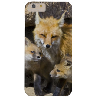 USA, Colorado, Breckenridge. Red fox mother 4 Barely There iPhone 6 Plus Case