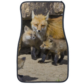 USA, Colorado, Breckenridge. Red fox mother 4 Car Mat