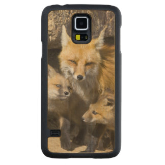 USA, Colorado, Breckenridge. Red fox mother 4 Carved Maple Galaxy S5 Case
