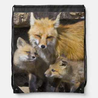USA, Colorado, Breckenridge. Red fox mother 4 Drawstring Bag