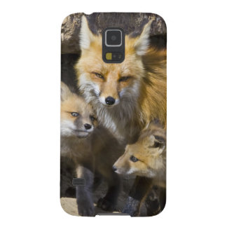 USA, Colorado, Breckenridge. Red fox mother 4 Galaxy S5 Case