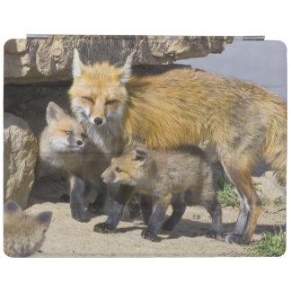 USA, Colorado, Breckenridge. Red fox mother 4 iPad Cover