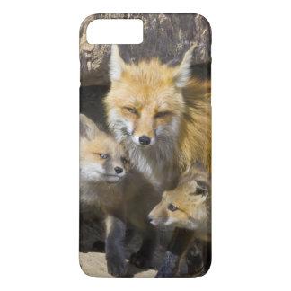 USA, Colorado, Breckenridge. Red fox mother 4 iPhone 8 Plus/7 Plus Case