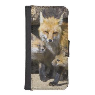 USA, Colorado, Breckenridge. Red fox mother 4 iPhone SE/5/5s Wallet Case