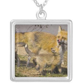 USA, Colorado, Breckenridge. Red fox mother Silver Plated Necklace