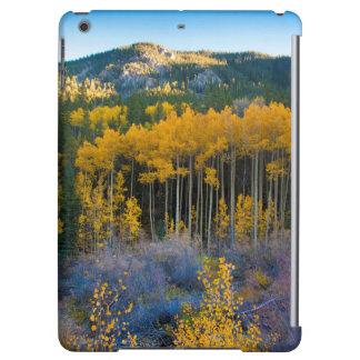 USA, Colorado. Bright Yellow Aspens in Rockies