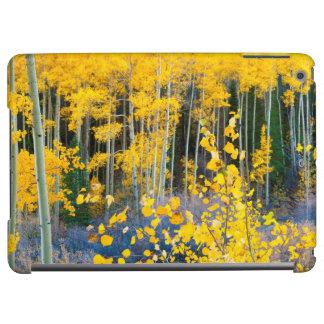 USA, Colorado. Bright Yellow Aspens In Rockies 2