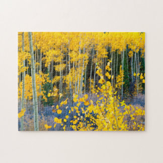 USA, Colorado. Bright Yellow Aspens In Rockies 2 Jigsaw Puzzle