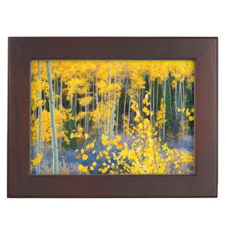USA, Colorado. Bright Yellow Aspens In Rockies 2 Keepsake Box